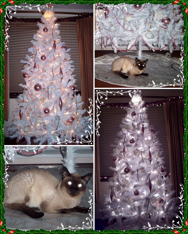 My tree and Merlin